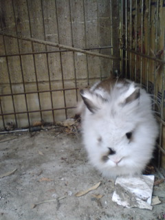 ウサギが…。