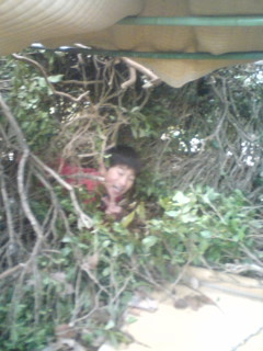 お茶の樹で秘密基地