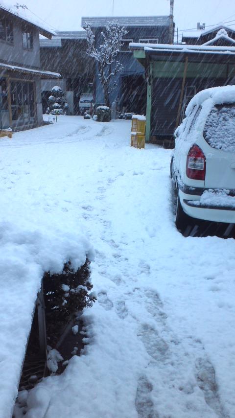 初雪とプリン作り